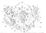 Coelogynopora bresslaui