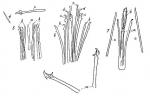 Coelogynopora schultzii