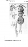 Notodelphys elegans from Sars, G.O. 1921