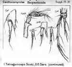 Tetragoniceps scotti from Sars, G.O. 1911