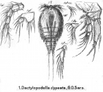 Dactylopodella clypeata from Sars, G.O. 1911