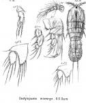 Dactylopusia micronyx from Sars, G.O. 1905