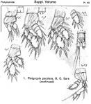 Platycopia perplexa from Sars, G.O. 1919