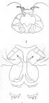 Lernanthropus trachuri from Brian, A 1906