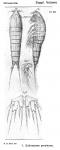 Ectinosoma proximum from Sars, G.O. 1919