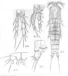 Schizopera fimbriata from Sars, G.O. 1909