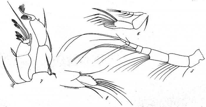 Idya ligustica from Brian, A 1921
