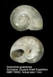 Tornidae