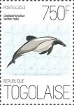 Cephalorhynchus hectori maui
