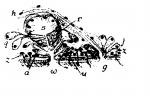 Monocelis pardus