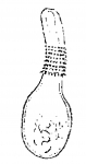 Promonotus orientalis