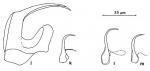 Polystyliphora karlingi