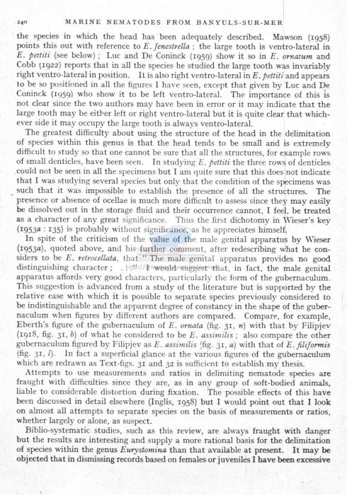 Eurystomina