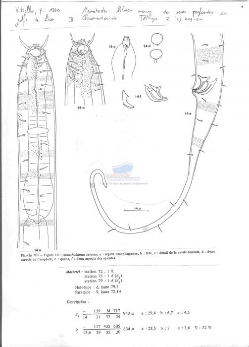 Acantholaimus setosus