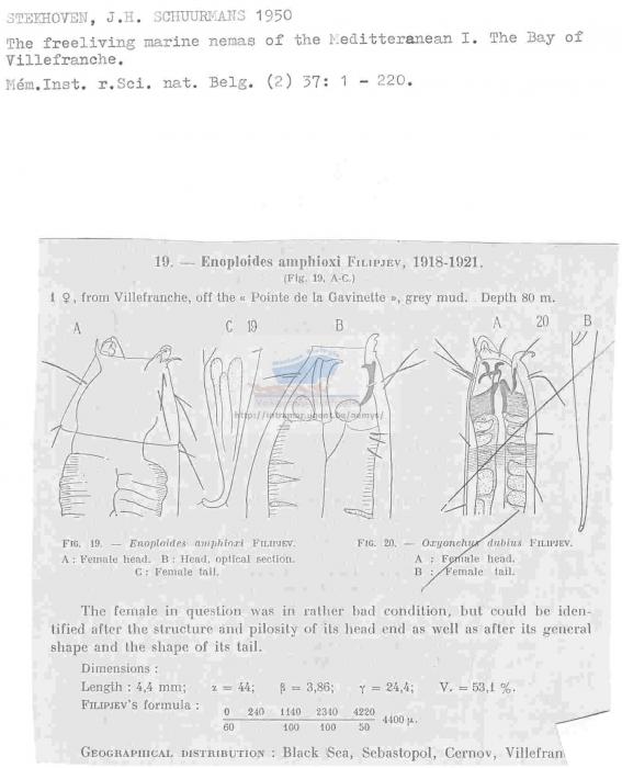 Enoploides amphioxi