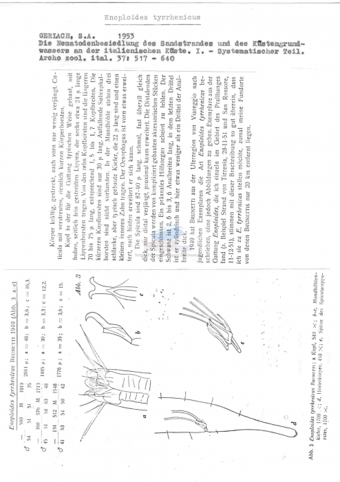 Enoploides tyrrhenicus
