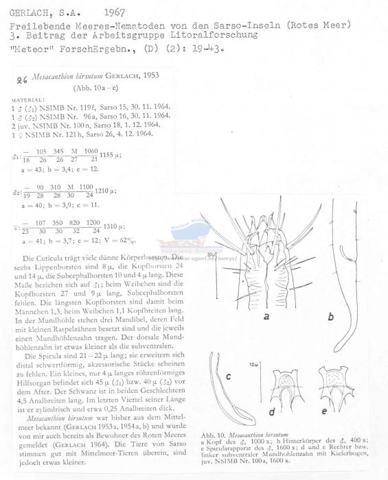 Mesacanthion hirsutum