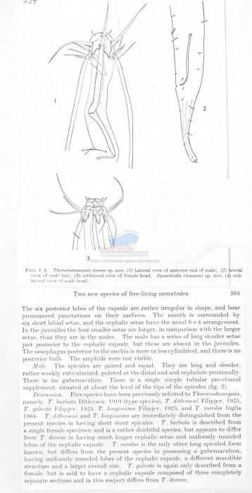 Thoracostomopsis doveae