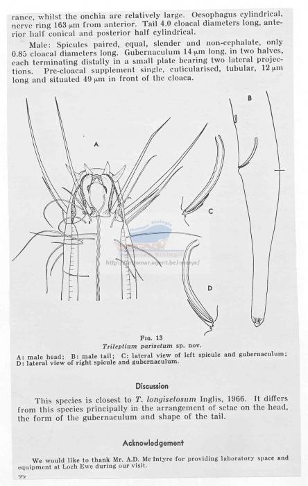 Trileptium parisetum
