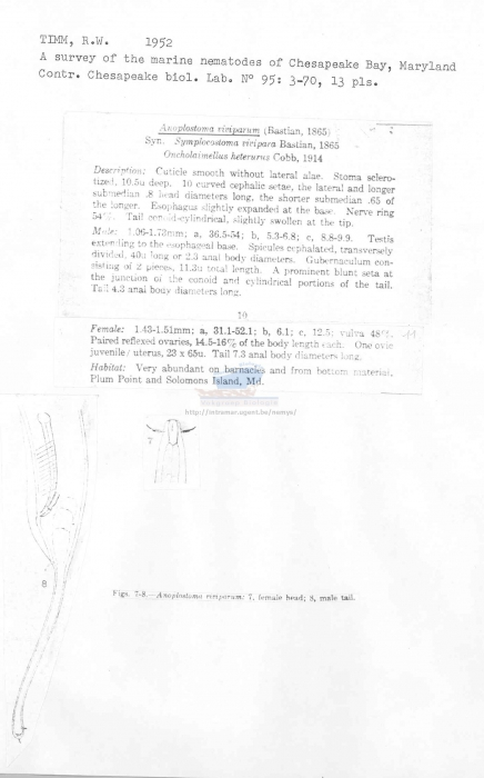 Anoplostoma viviparum