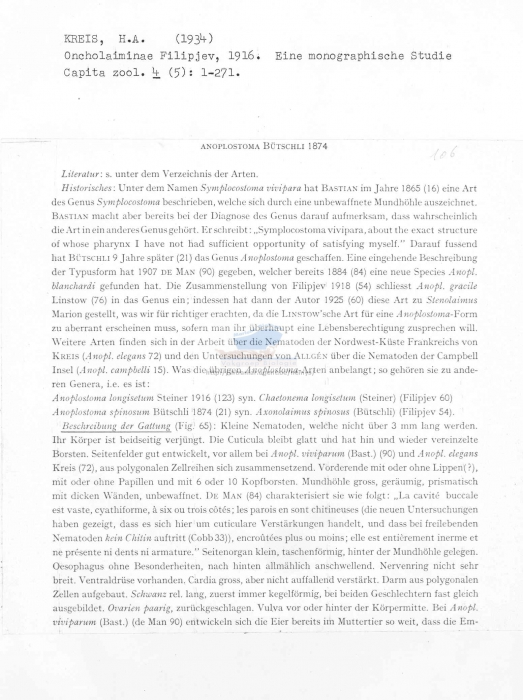 Anoplostoma blanchardi