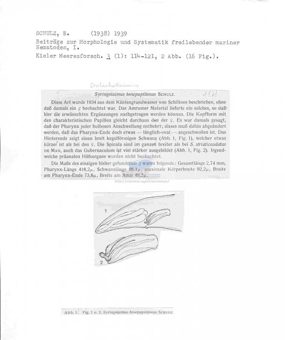 Trissonchulus benepapillosus