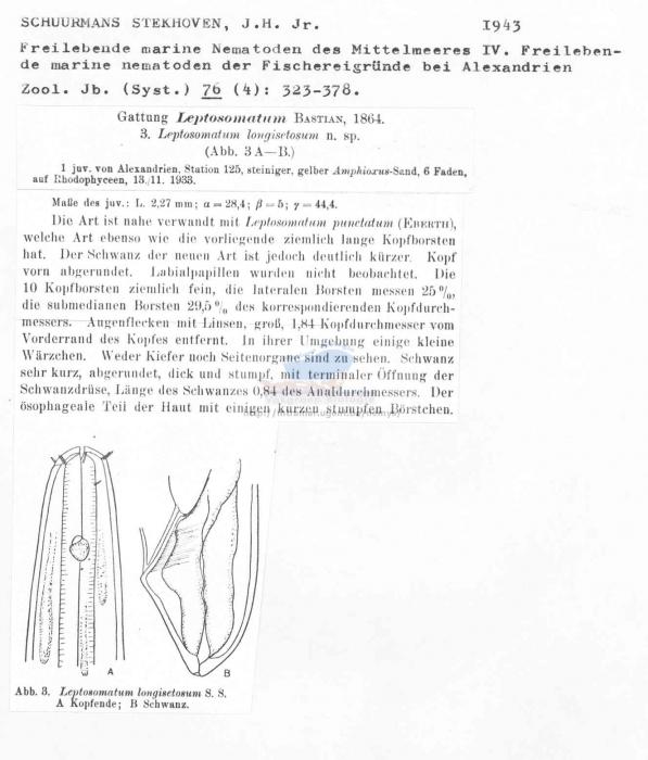 Leptosomatum longisetosum