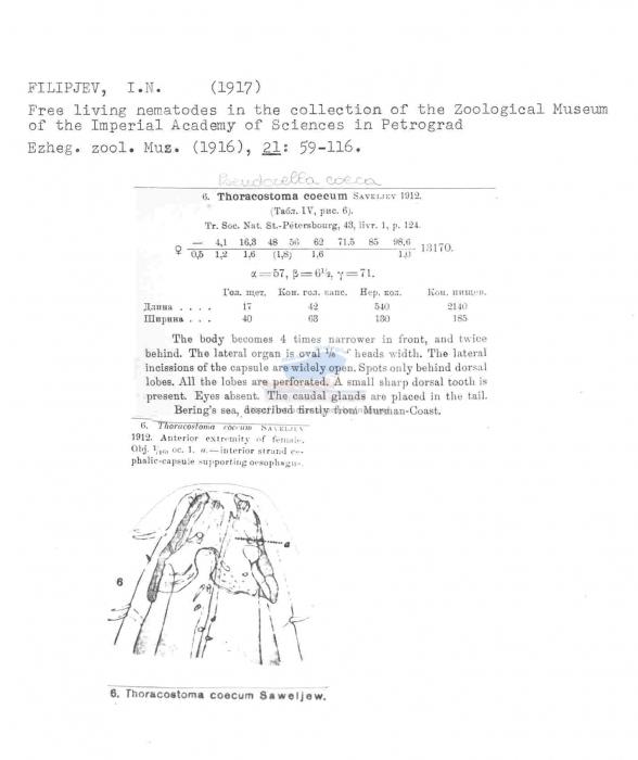 Pseudocella coeca