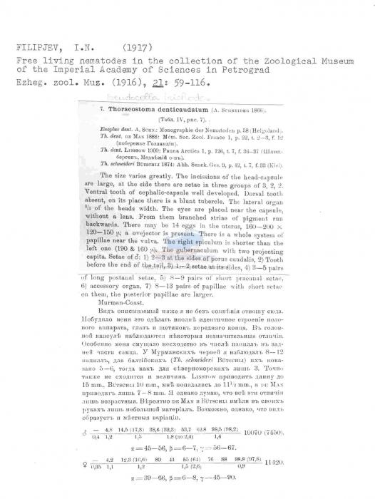 Pseudocella trichodes