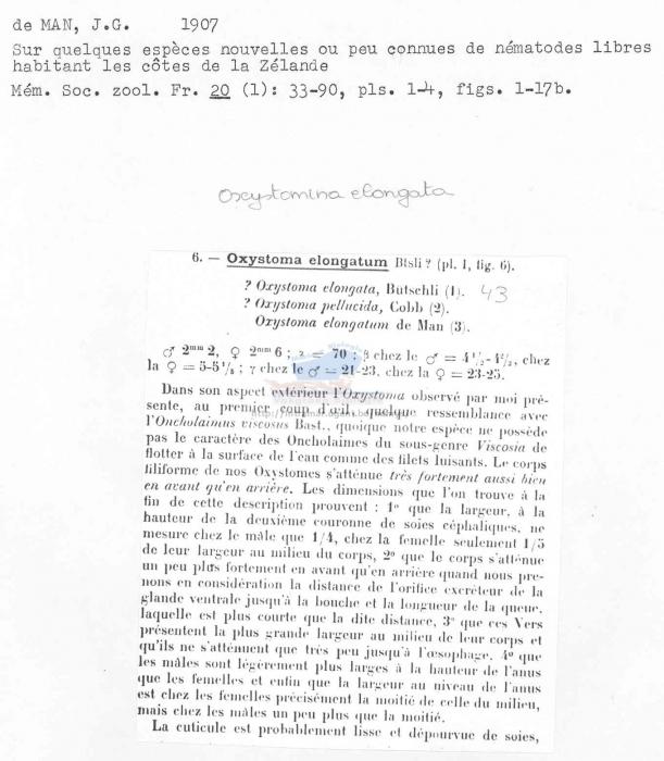 Oxystomina elongata
