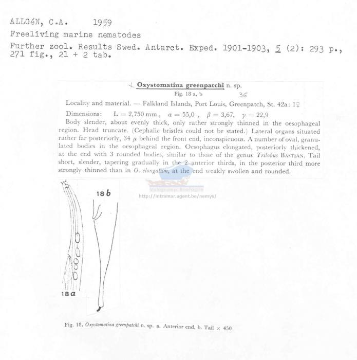 Oxystomina greenpatchi