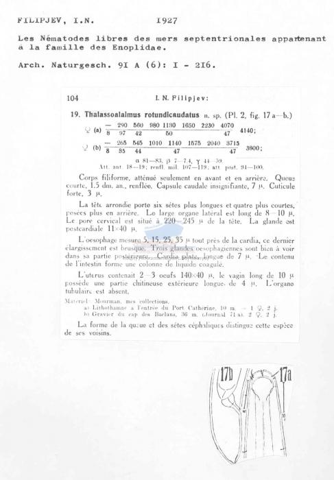Thalassoalaimus rotundicaudatus