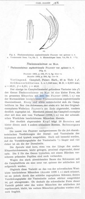 Thalassoalaimus septentrionalis