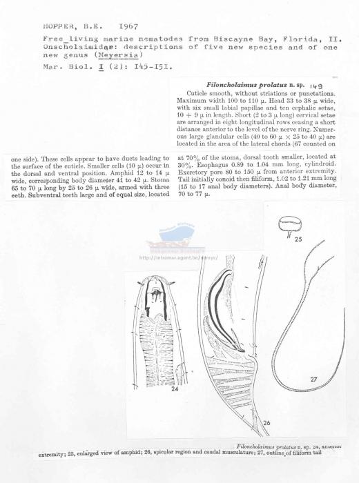Filoncholaimus prolatus
