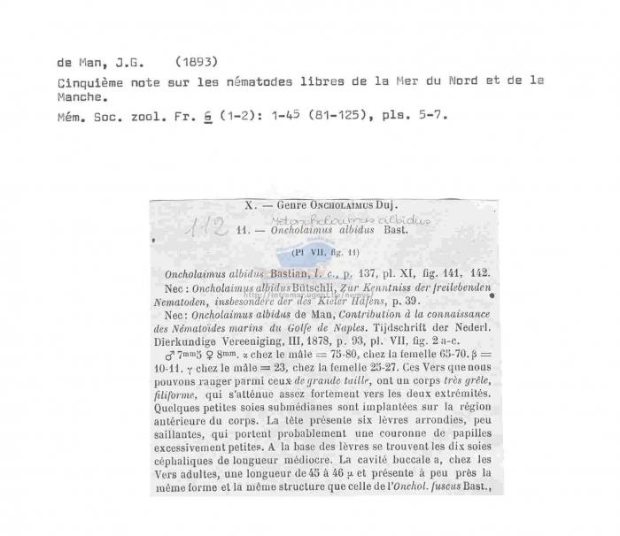 Metoncholaimus albidus