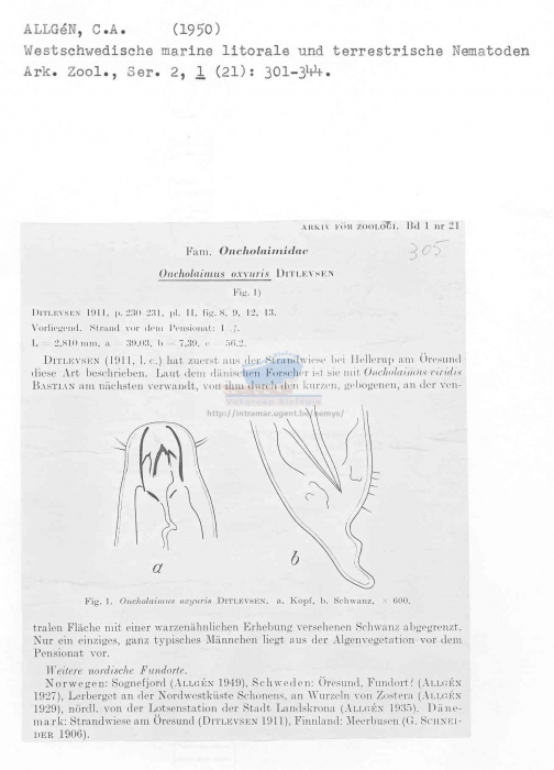 Oncholaimus oxyuris