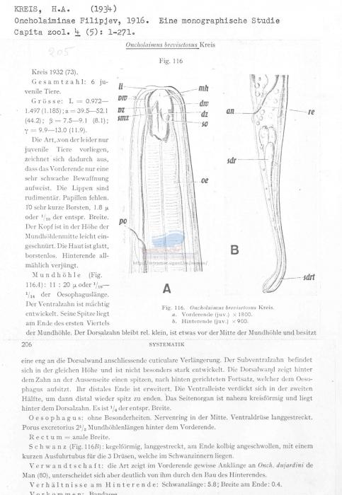 Oncholaimus brevisetosus