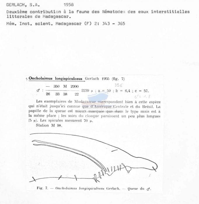 Oncholaimus longispiculosus