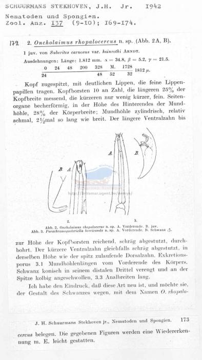 Oncholaimus rhopalocercus