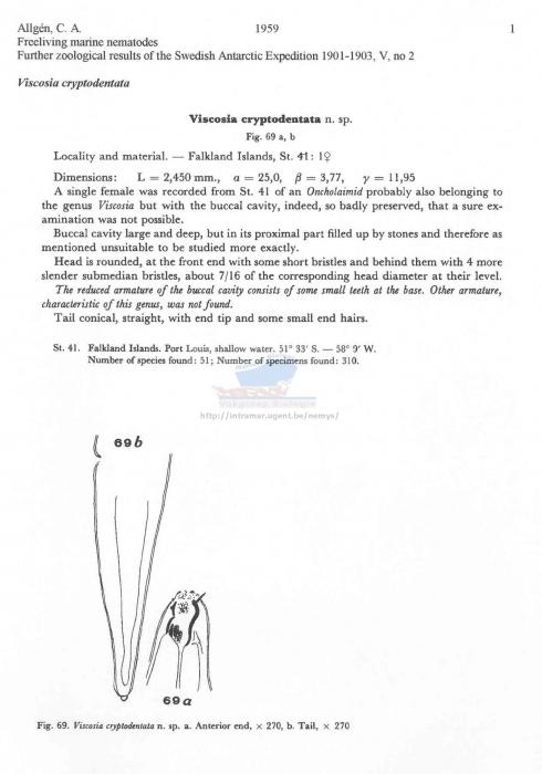 Viscosia cryptodentata