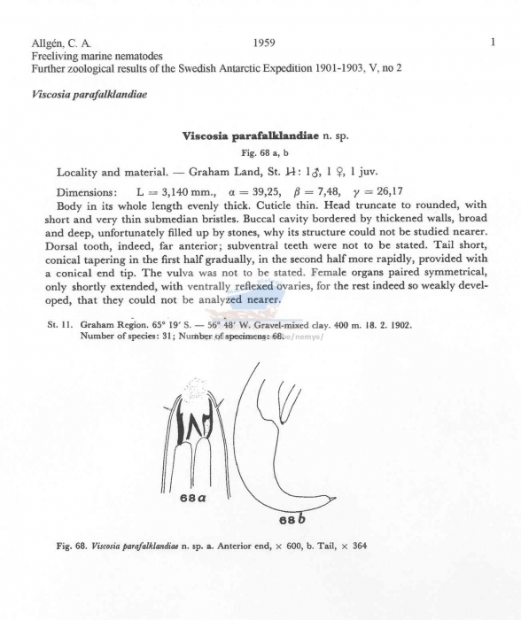 Viscosia parafalklandiae