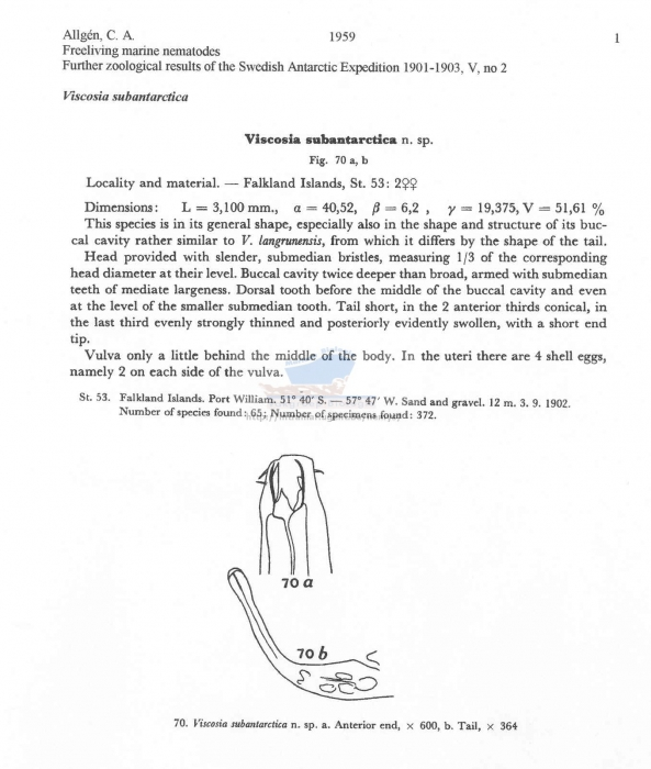 Viscosia subantarctica