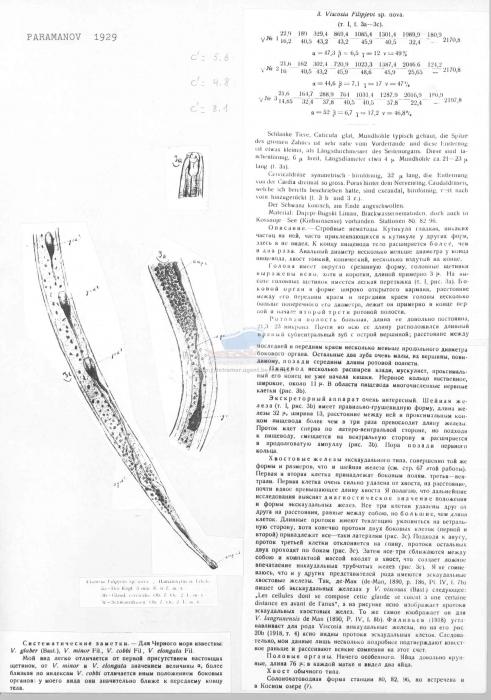 Viscosia filipjevi