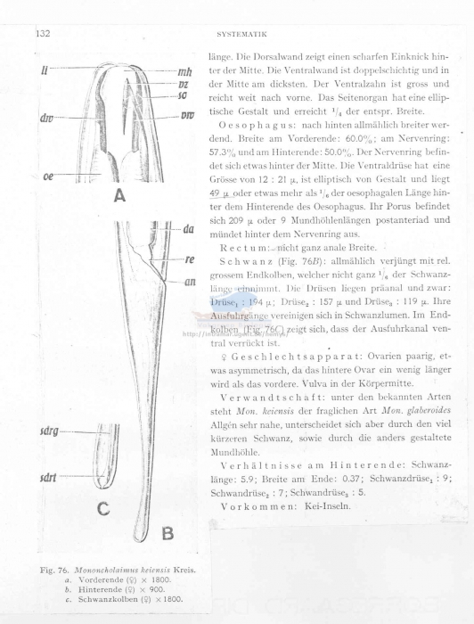 Viscosia keiensis