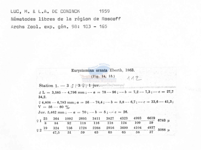 Eurystomina ornata