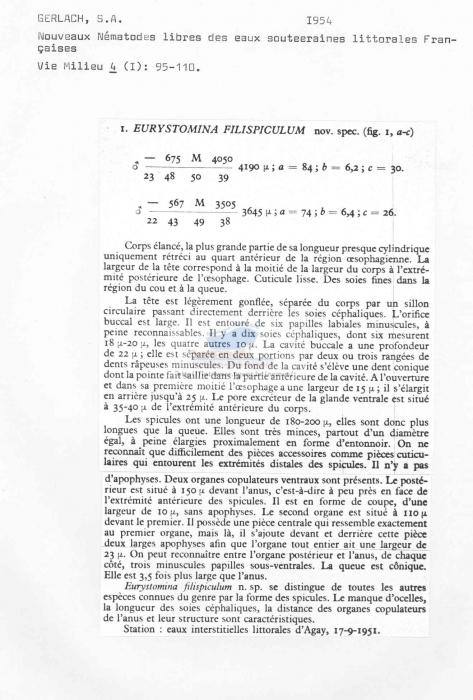 Eurystomina filispiculum