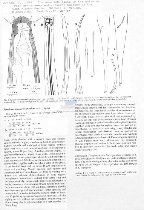 Symplocostoma brevispiculum
