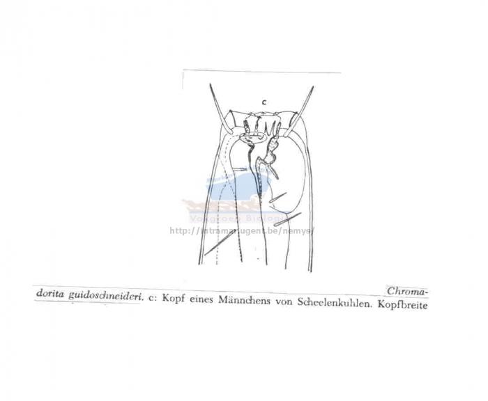 Chromadorita guidoschneideri
