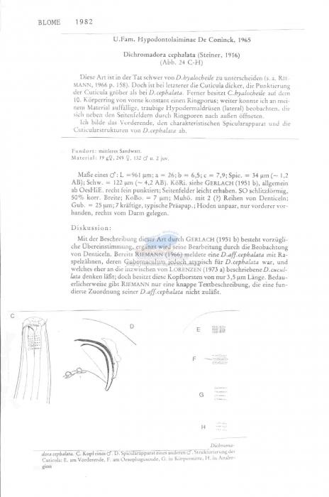 Dichromadora cephalata