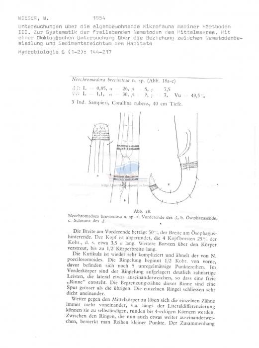 Neochromadora brevisetosa